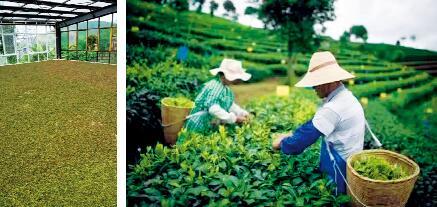 墨江县龙潭乡龙豪佳叶茶叶种植农民专业合作社