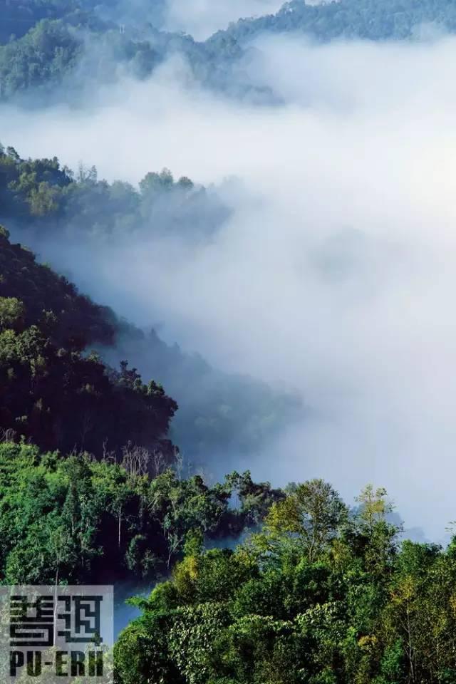 普洱茶的生态遗产
