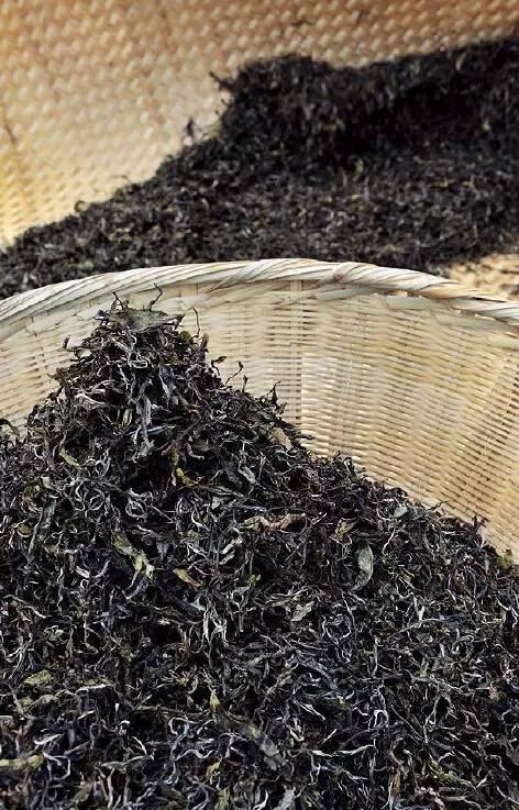 """普洱茶为什么需要发酵的""""载体"""""""
